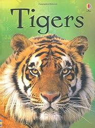Beginners: Tigers (Usborne Beginners)