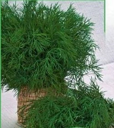 Ukrainian Organic Vegetable Dill seeds ''Shmaragd''. Herb seed - 1000 Seeds.