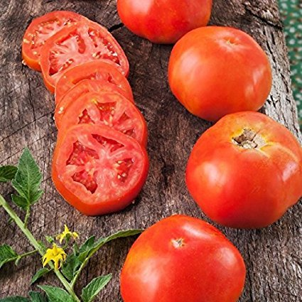 David's Garden Seeds Tomato Slicing Rutgers SV756PU (Red) 50 Heirloom Seeds