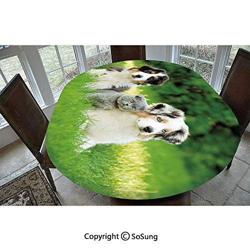 """Dog Polyester Fitted Tablecloth,Cute Pets Puppy Family in the Garden Australian Shepherds and A Cat Scenery Decorative Oblong Elastic Edge Fitted Table Cover,Fits Oval Tables 48x48"""" Cream Grey Fern Gr"""