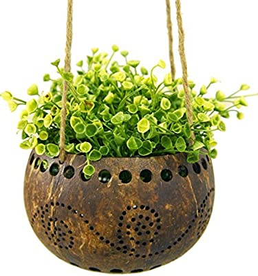 Exotic Elegance jardín maceta decorativa de maceta colgante, de corteza de coco (tamaño M).: Amazon.es: Jardín