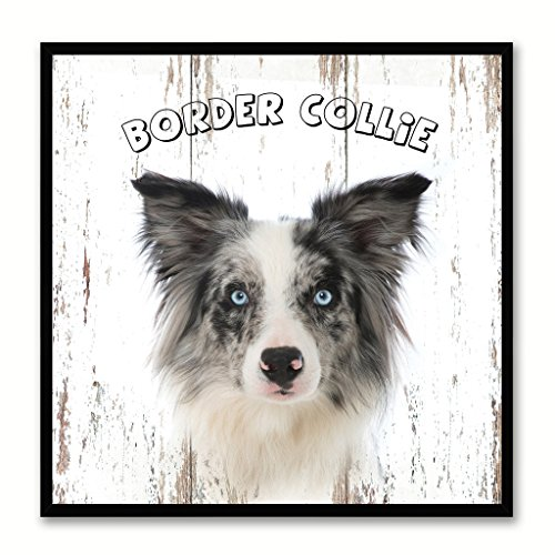 Border Picture Collie Frame - Border Collie Dog Canvas Print Picture Frame Gift Home Decor Wall Art Decoration