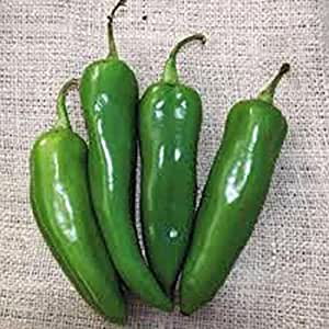 PEPPER, ANAHEIM, HEIRLOOM, ORGANIC 500 SEEDS, MILDLY SPICY GREAT FRESH OR DRIED