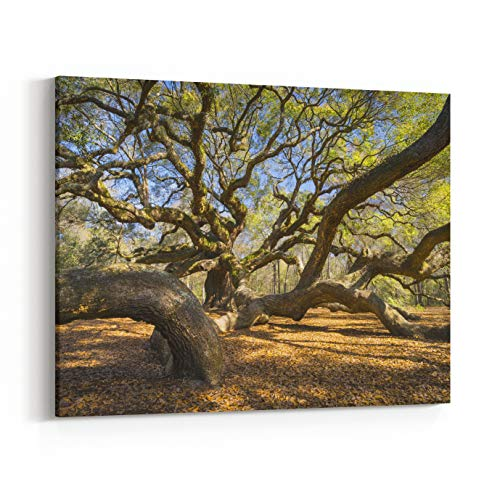 Rosenberry Rooms Canvas Wall Art Prints - South Carolina Lowcountry Angel Oak Tree Charleston SC Nature Scenic Spring Landscape Photography (24 x 20 inches) -