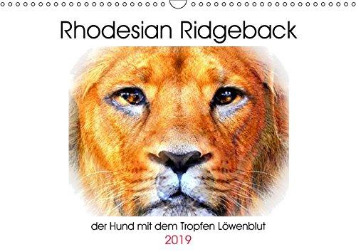 Rhodesian Ridgeback - der Hund mit dem Tropfen Löwenblut - Rhodesian Ridgeback, afrikanischer Löwenhund (Wall Calendar 2019, 14 Pages, Size DIN A3 = 11.7 x 16.5 inches)