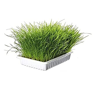 2x1 Bandeja hierba para gatos purgante TRIXIE 100grs.