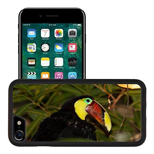 Liili Premium Apple iPhone 7 iPhone 8 Aluminum Snap Case The Chestnut mandibled Toucan or Swainson Toucan Ramphastos ambiguus swainsonii IMAGE ID (Chestnut Mandibled Toucan)