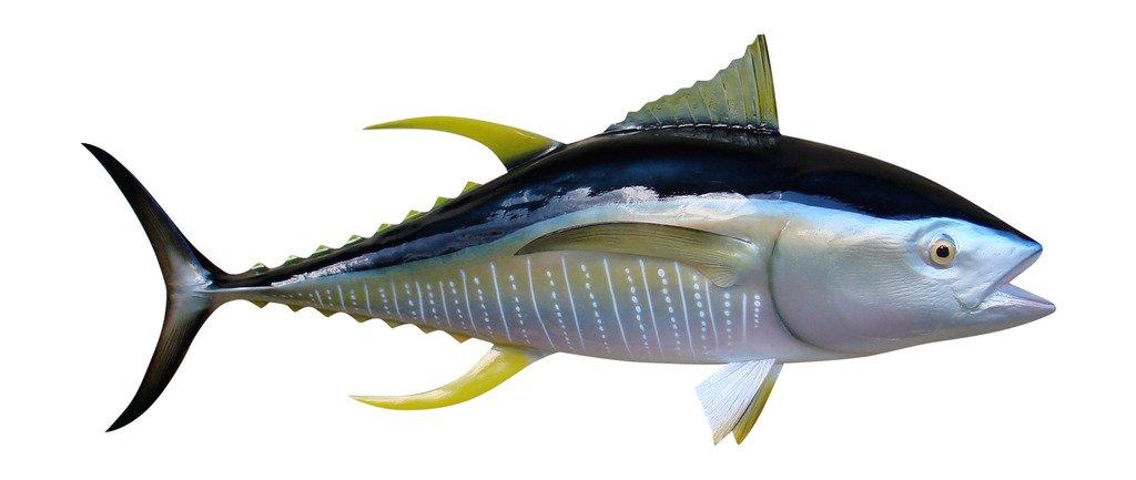 52'' Yellowfin Tuna Half Mount Fish Replica, Fishing Wall & Coastal Decor