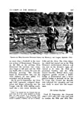 Riviera to the Rhine: U.S. Army in World War