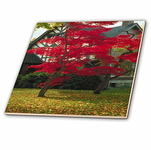3dRose TDSwhite - Miscellaneous Photography - Pretty Foliage Tudor Home - 6 Inch Glass Tile (ct_285426_6) ()