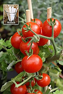 Summer Sweet Cherry Tomato (Organic) Tomato 150 Seeds By Jays Seeds Upc 650327337497 + 1 Free Plant Marker
