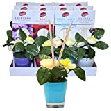 Reed Diffuser Flowers Display , Case of 48