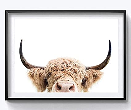 81a8a85ba75 Image Unavailable. Image not available for. Color  HYD Art Highland Cow  Farm Animal Canvas Wall Art Prints ...