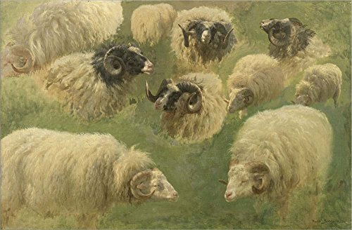 Black-Faced Ram and Sheep, 10 Studies by Rosa Bonheur Laminated Art Print, 27 x 18 -