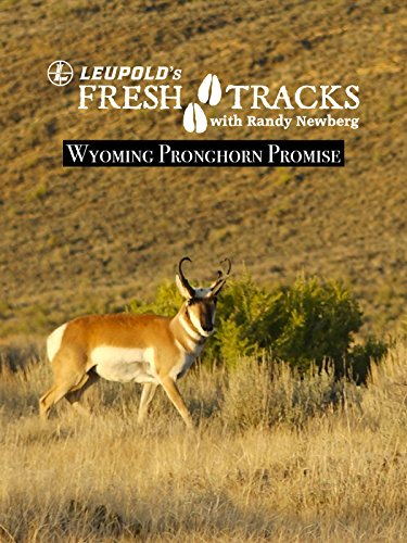 Wyoming Pronghorn Promise