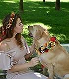 Dog flower crown Pets at Wedding Puppy Flower Collar Flowerdog dog birthday party