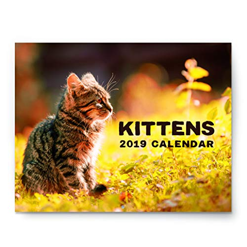 2019 Kitten Wall Calendar - Large 11