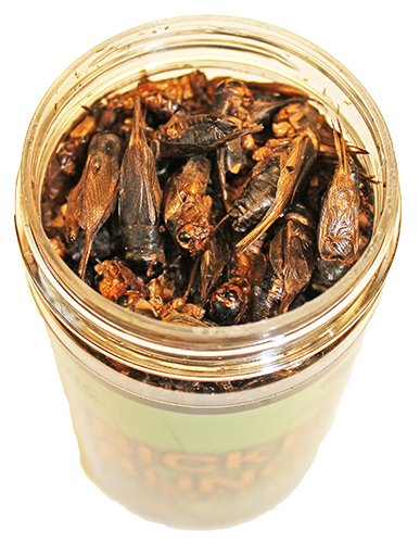 Exotic Nutrition Dried Insect 3 Pack - Crickets, Grasshoppers, Mealworms by Exotic Nutrition (Image #1)
