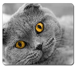 Brian114 Professional Gaming Mouse Pad with 12.9 x 11 Inch Large Dimensions Mouse pads- Scottish Fold Cute Cat