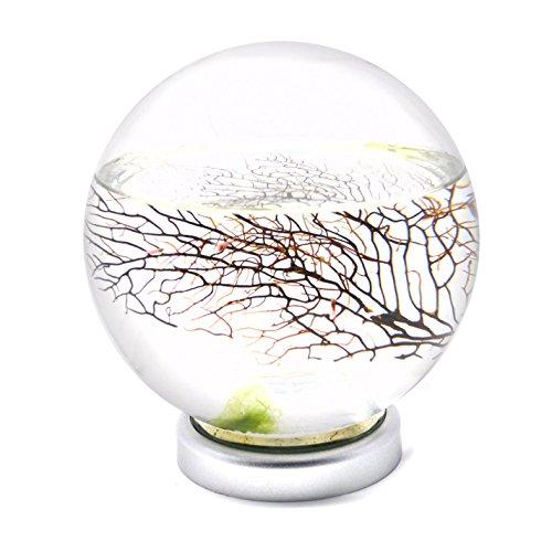 EcoSphere Closed Aquatic Ecosystem, Large Sphere with LED Base