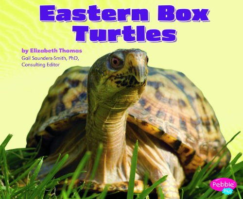Eastern Box Turtles (Reptiles)