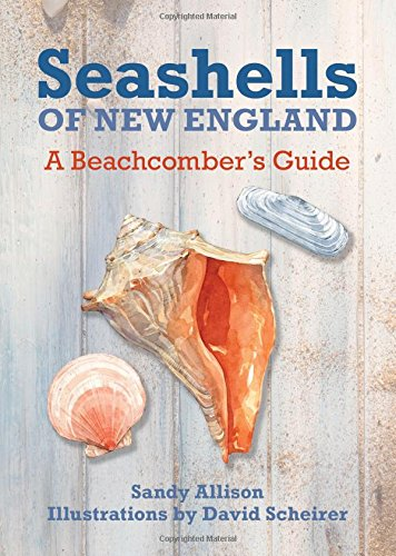 Seashells of New England: A Beachcomber's Guide