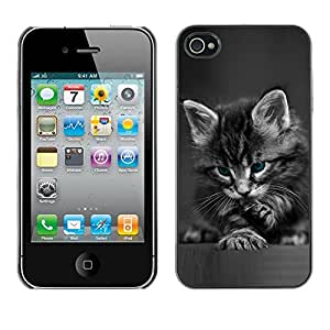 Design for Girls Plastic Cover Case FOR iPhone 4 / 4S Cute Paw Kitten Whiskers Grey Baby Cat OBBA