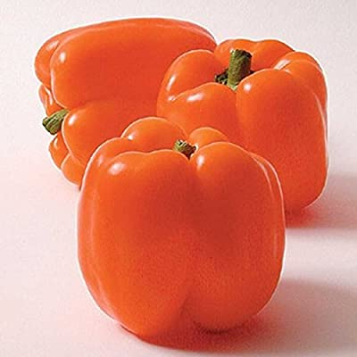 Horizon Sweet Pepper Garden Seeds - Non-GMO - Bright Orange Bell Peppers - Vegetable Gardening Seeds by Mountain Valley Seed