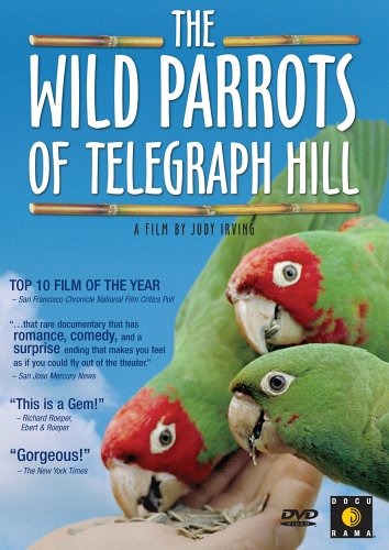 Image result for wild parrots of telegraph hill dvd