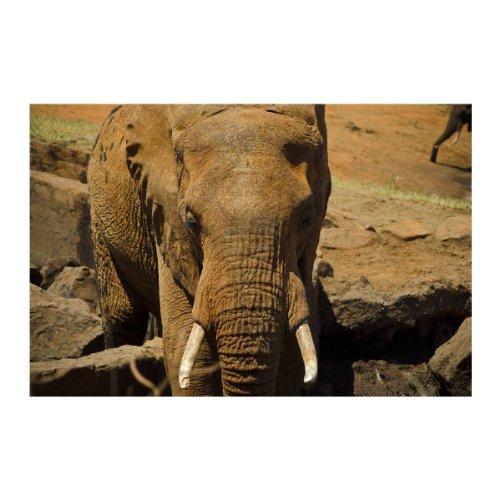 """My Africa - Safari With Elephant 16"", Modern Self Adhesive Mural Wallpaper Wallsticker Decor Art Photo, 95"" x 142"" - 240 x 360 cm."