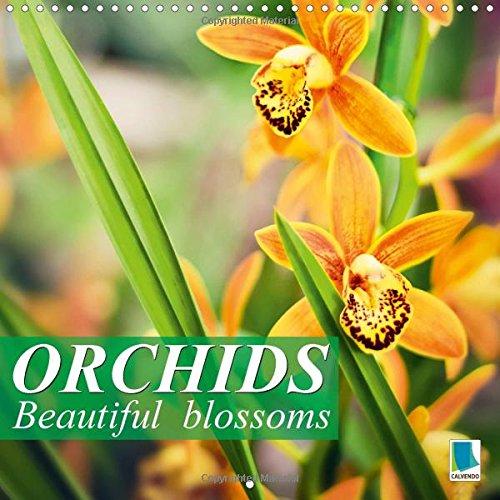 Orchids  Beautiful Blossoms  Wall Calendar 2015 300 × 300 Mm Square   Calvendo Nature
