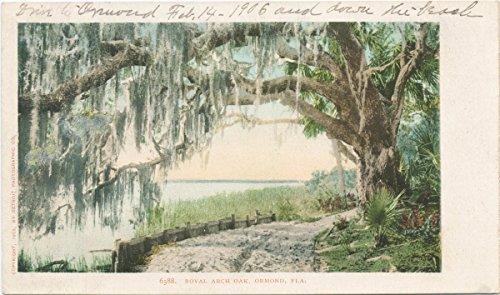 Historic Pictoric Postcard Print | Royal Arch Oak, Ormond, Fla, 1902 | Vintage Fine Art