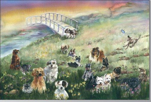 Rainbow Bridge Pet Sympathy Card for Dog (6-Pack)