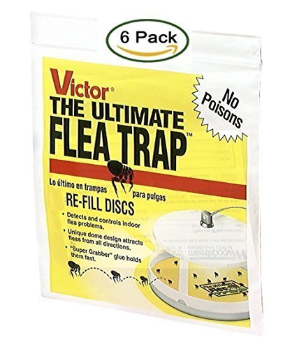 Victor M231 Ultimate Flea Trap Refills, (6 Refills) (Home Remedies For Bed Bugs In Carpet)