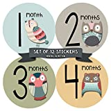 Monthly Baby Stickers by Months In Motion | 12 Month Milestone Sticker for Newborn Babies Owl (Style 1172)