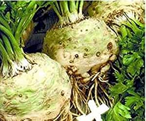 Seeds Root Celery Edward Organically Grown Heirloom Root Vegetable NON-GMO