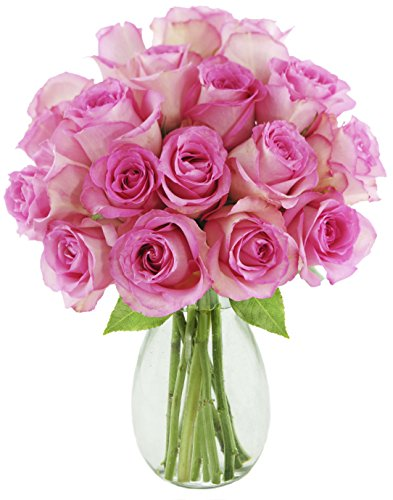 Bouquet of 18 Fresh Cut Pink Roses (Farm-Fresh, Long-Stem) with Free Vase Included by Blooms2Door