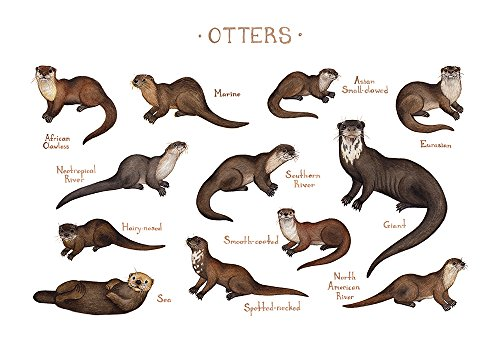 Otters of the World Field Guide Art Print