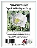 100 Organic White Afghan Poppy Seeds Papaver Somniferum