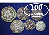 Salty Pelican Sea Urchin Seashells (Set of 100) ~ 2 1/2'' to 4'' Range, Gator Alfonso Alphonso, Bubble wrap Packed, Volume Priced