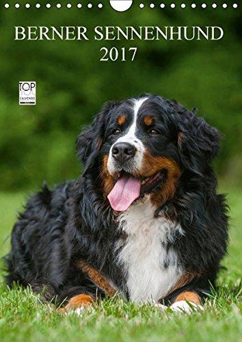 Berner Sennenhund 2017 (Wandkalender 2017 DIN A4 hoch): Berner Sennenhunde auf 13 wundervollen Fotos (Monatskalender, 14 Seiten ) (CALVENDO Tiere)