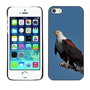 Be Good Phone Accessory // Dura Cáscara cubierta Protectora Caso Carcasa Funda de Protección para Apple Iphone 5 / 5S // eagle blue bird feathers black American