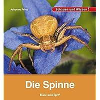 Die Spinne: Schauen und Wissen!