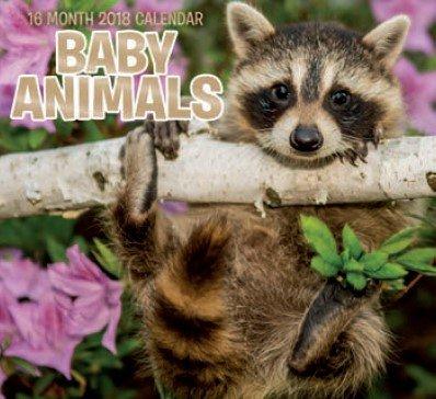 Beautiful Baby Animals 2018 Wall Calendar (16-month)