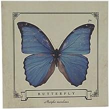 4580325294200 Menelaus Morpho block memo/insect specimen series