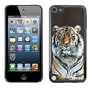 Qstar Arte & diseño plástico duro Fundas Cover Cubre Hard Case Cover para Apple iPod Touch 5 ( Tiger Stripes Fur Grey Nature Animal Zoo)
