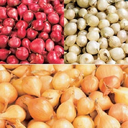 Onion Sets Red, Yellow, White or Pink Box Mix (40  Bulbs) Garden Vegetable (Red) White or Pink Box Mix (40 Bulbs) Garden Vegetable (Red) Pinkdose