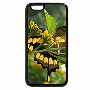 iPhone 6S Plus Case, iPhone 6 Plus Case, UNDERSIDE OF A SWALLOWTAIL