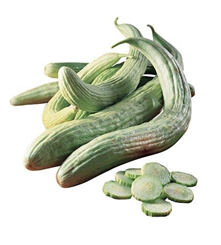 Burpee Armenian Cucumber Seeds 100 seeds
