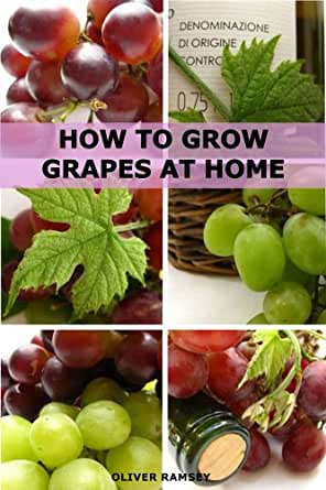 How To Grow Grapes At Home: Dummies Guide To Growing Grapes From